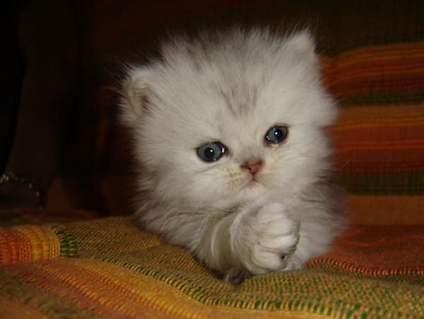 white lovely baby