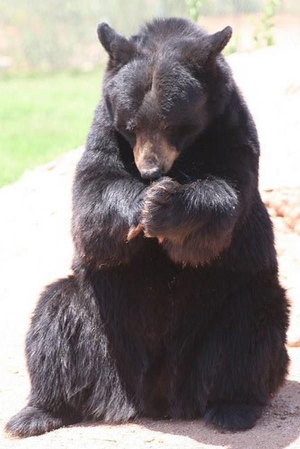 Black Bear Pray