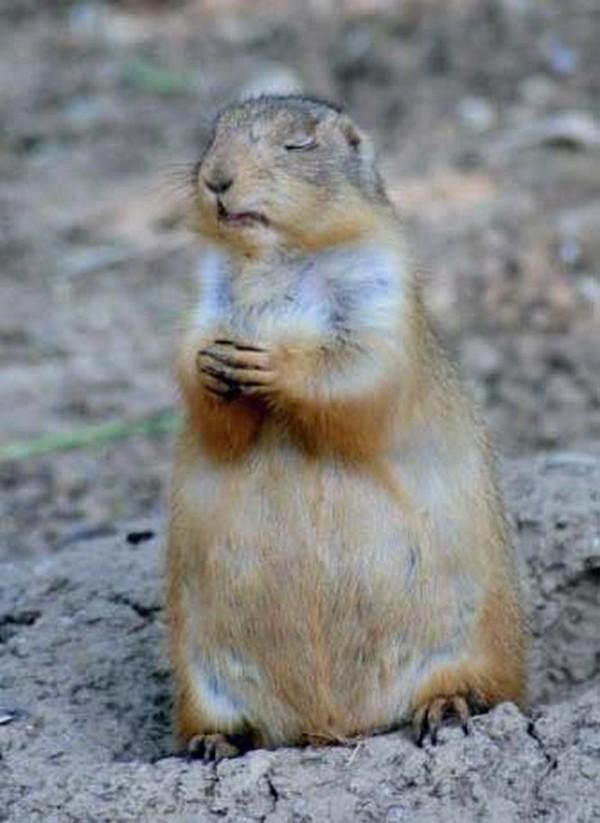 Bear Pray