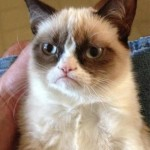 The 20 Super Cute Kittens as Emoticons