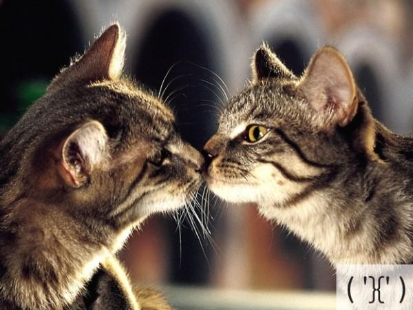 pics of cute kittens