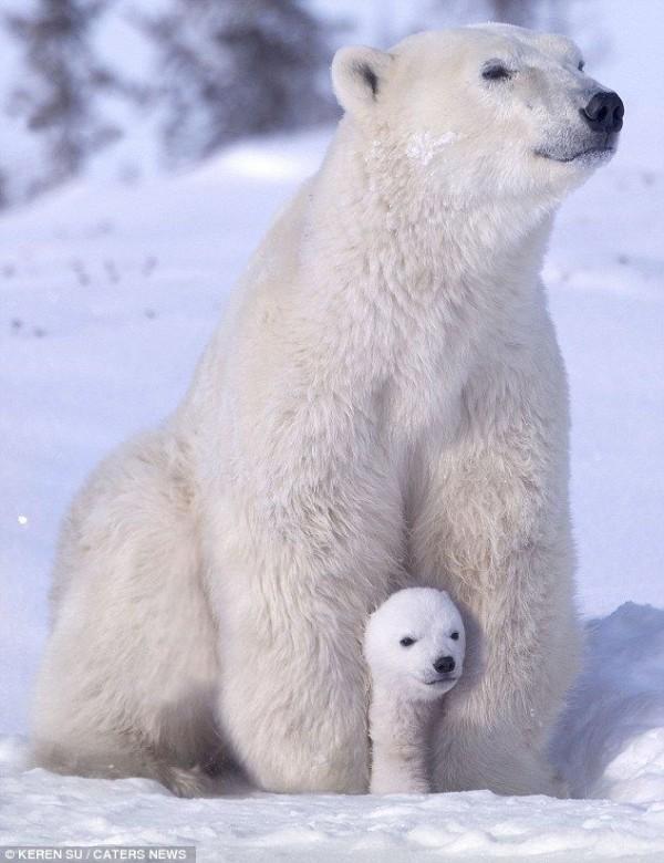 Winter Fun with Polar Bear