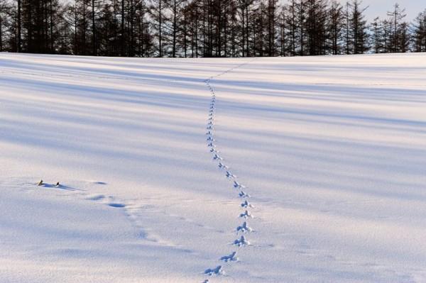 Landscape Snow Photos
