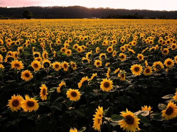 Flowers Landscape Photography