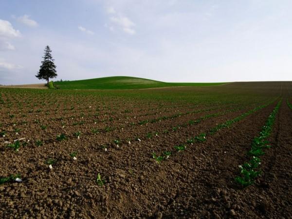 Landscape Pictures by Kent Shiraishi