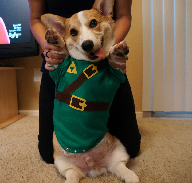 The Cutest Corgi Ever-11
