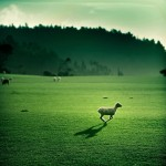 20 Beautiful Examples of Green Photography