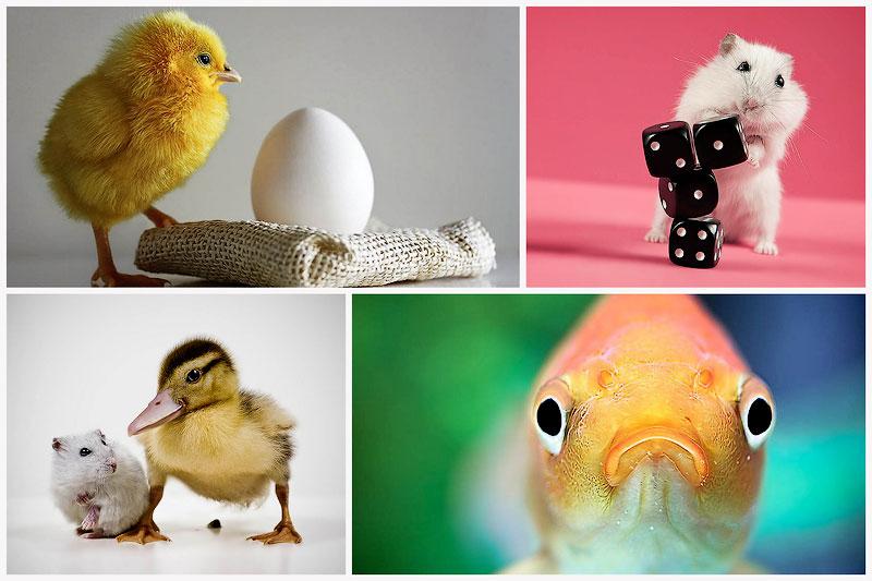 Funny Animal Photography by Eibo