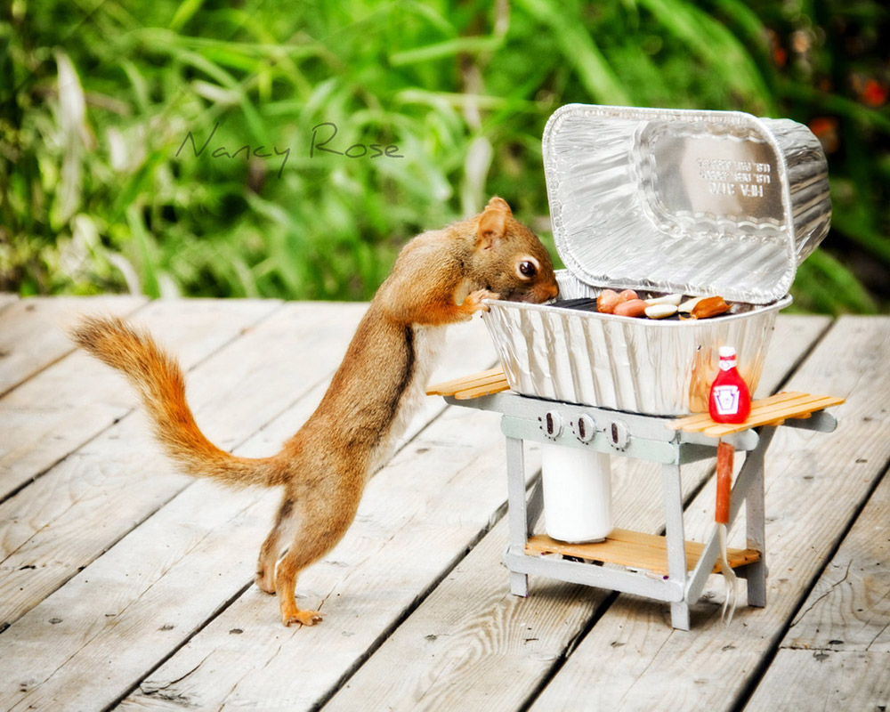 Adventures of a Squirrel to Get Food