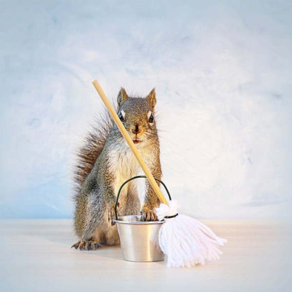 a squirrels adventure A pet squirrel named mungo passed away it 29-9-2017 when you've got fur instead of feathers with new online and downloadable jigsaw puzzles a squirrels adventure being added daily.