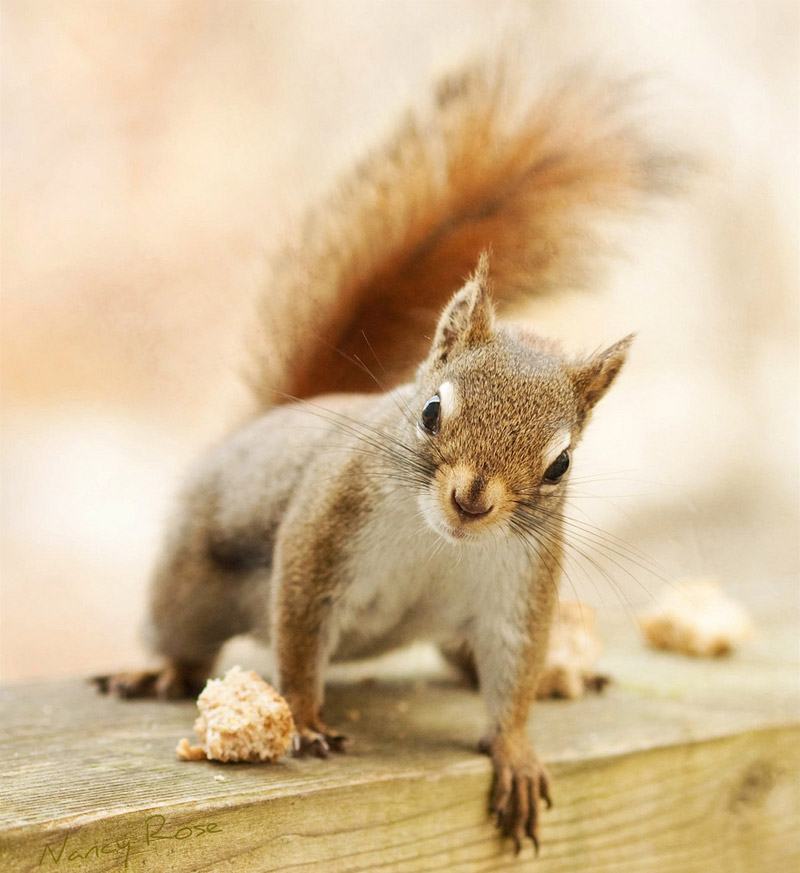 a squirrels adventure A cheeky squirrel stole a gopro and took it on a little adventure through the trees of montreal in the video the rodent films its own ascent of a tree and even its heart beat when it gets its .