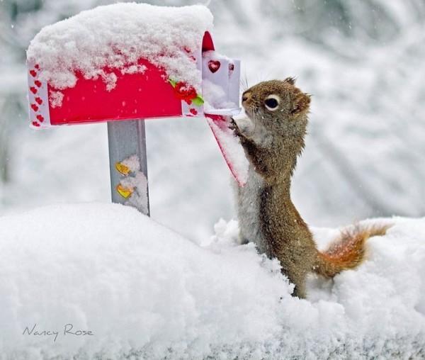 Adorable Squirrel Photos