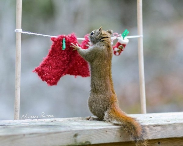 Adorable Squirrel Photos