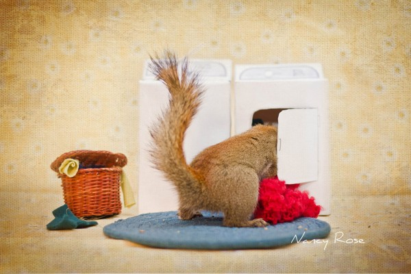 Amazingly Adorable Adventures of a Squirrel to Get Food