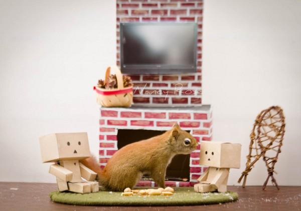 Amazingly Adorable Adventures of a Squirrel to Get Food