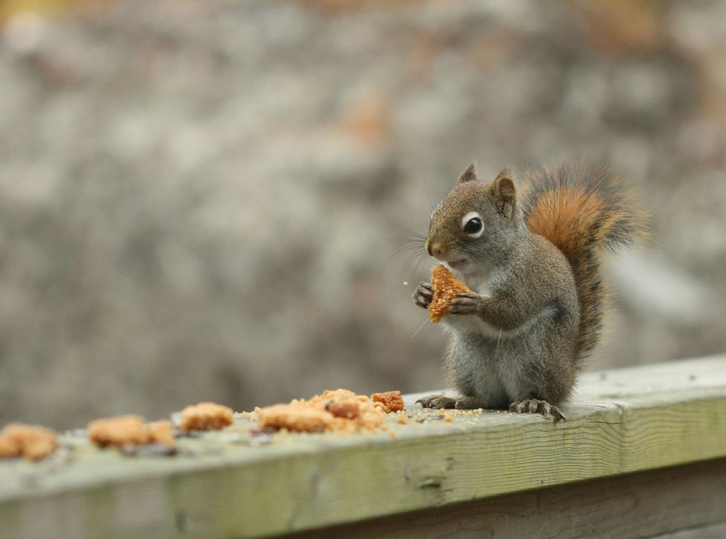 Marvelous Squirrels Photography by Nancy Rose