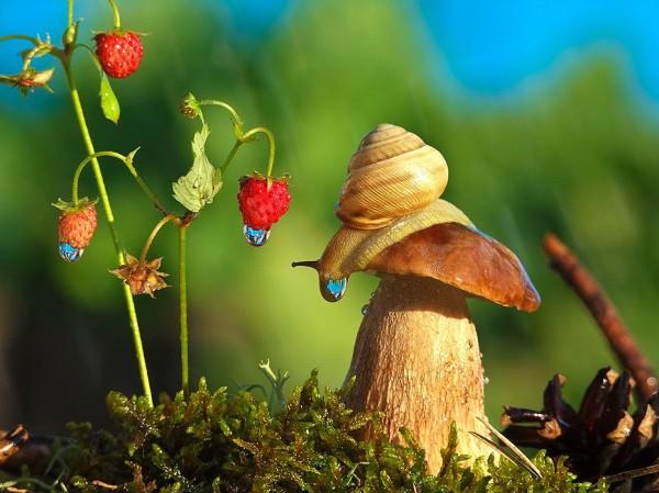 Little World by Vyacheslav Mishchenko
