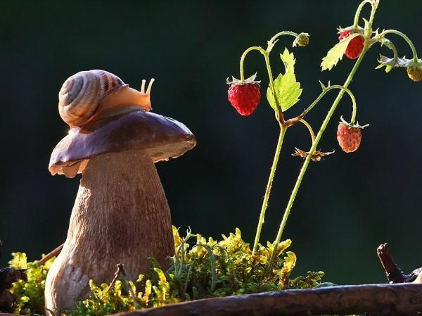 Tale of Nature from Vyacheslav Mishchenko