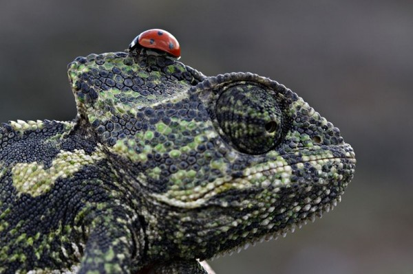 Close-up by Mehmet Karaca