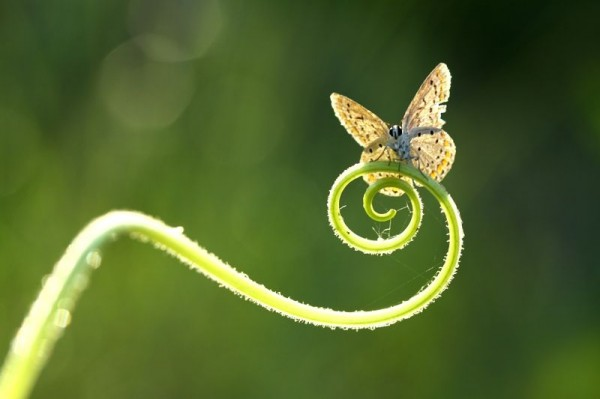 Mehmet Karaca Photography