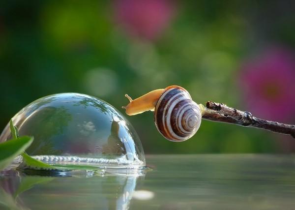 Inspirational Macro Photography