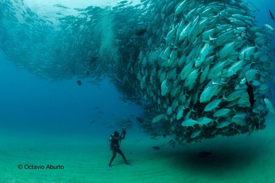 Photos capture underwater phenomenon