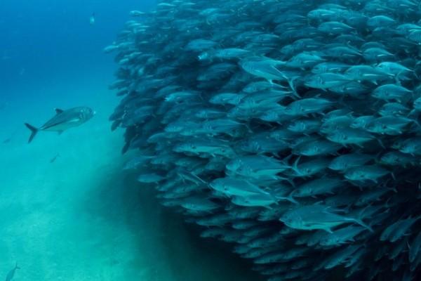 Underwater Photography by Octavio Aburto