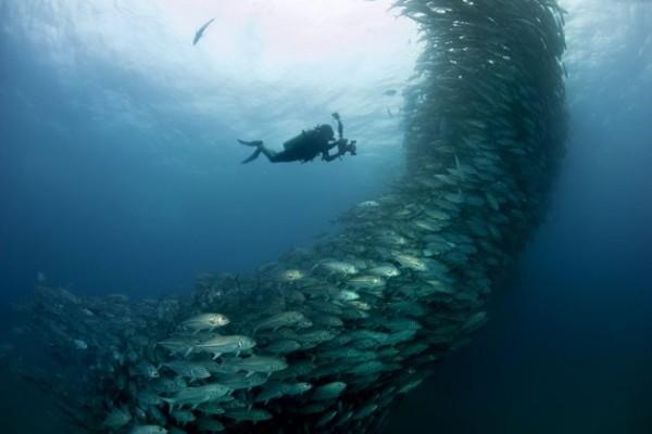 Photos capture underwater