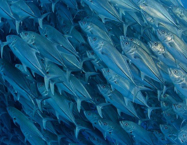 Photos Capture Underwater by Octavio Aburto