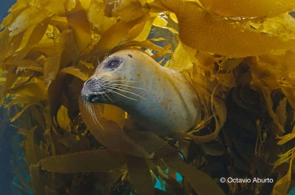 hidden among the foliage, a seal watching me carefully