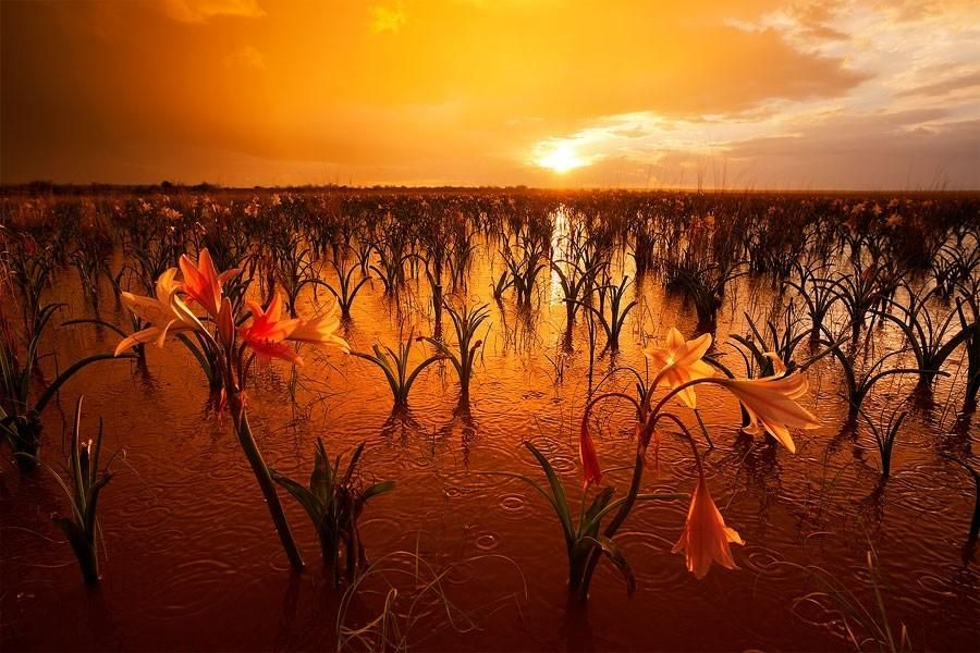 Landscapes by Hougaard Malan