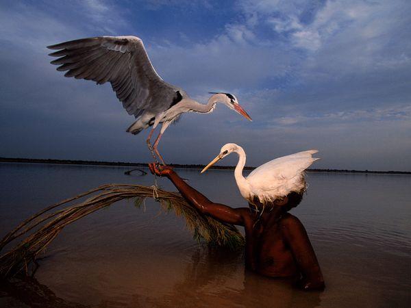 Bird Hunter, Pakistan