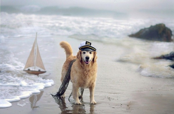 Camp Dog at Beach