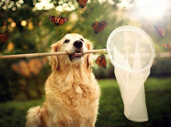 Camp Dog catching a Butterfllies