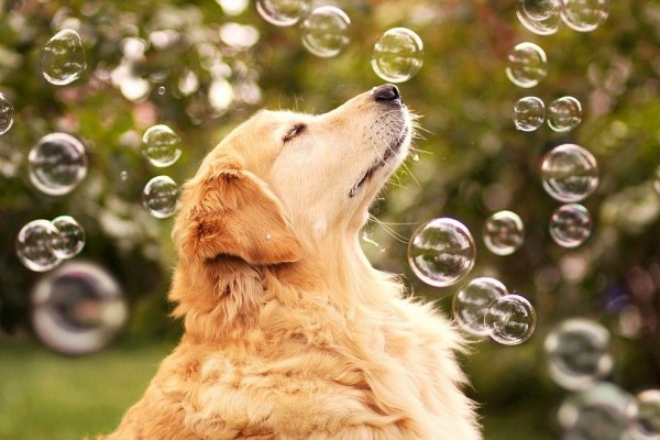 Camp Dog in Bubble Blower