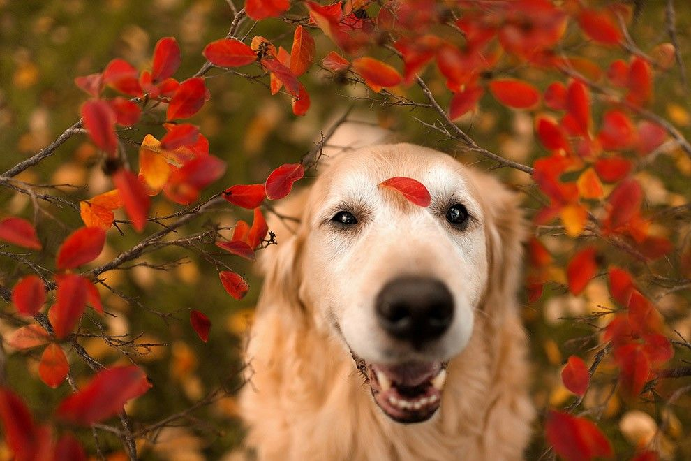 Camp Dog in Flowers