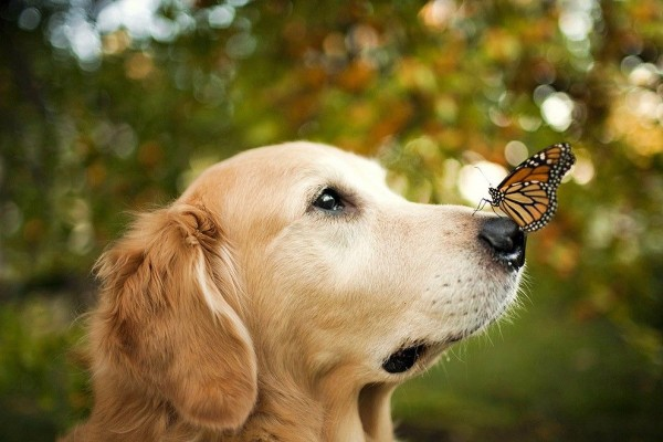 Camp Dog with butterfly