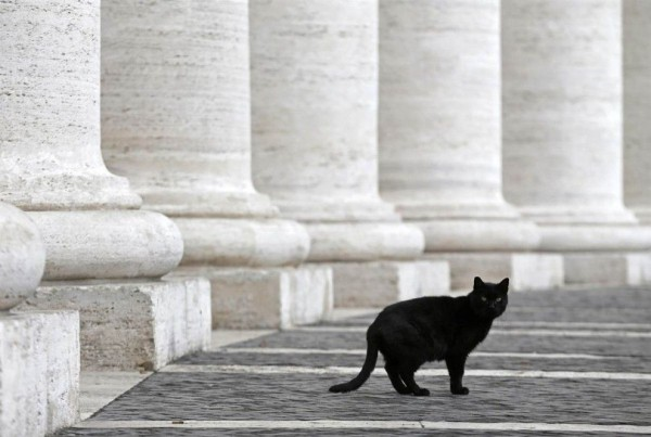 Cat walks past the colonnade of St. Peter's in the Vatican