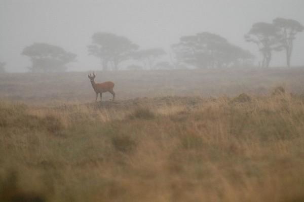 Deer fog photo by Becky Cartwright