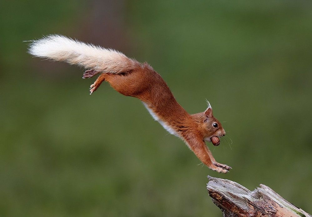 """Winners and Finalists of the Contest """"Mammal Photographer of the Year 2013"""""""
