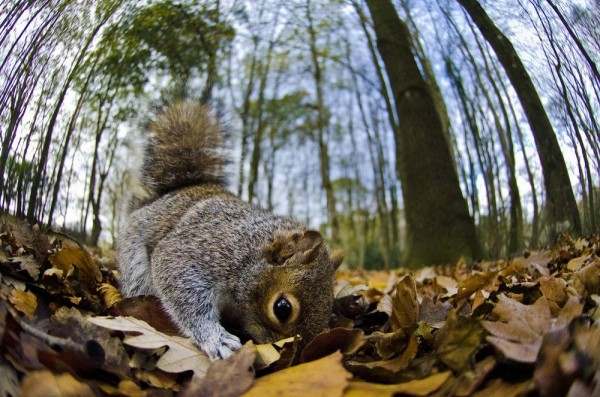 "Winners and Finalists of the Contest ""Mammal Photographer of the Year 2013"""