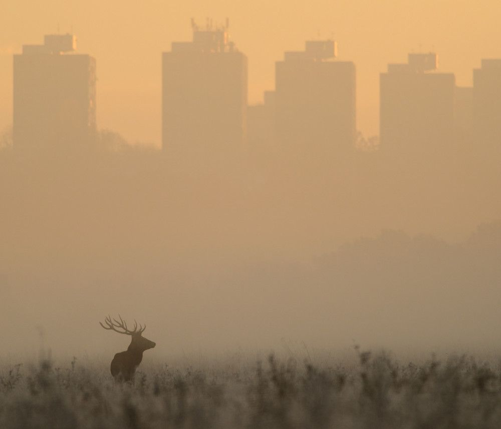 """""""In Richmond Park"""" by Richard Fisher"""