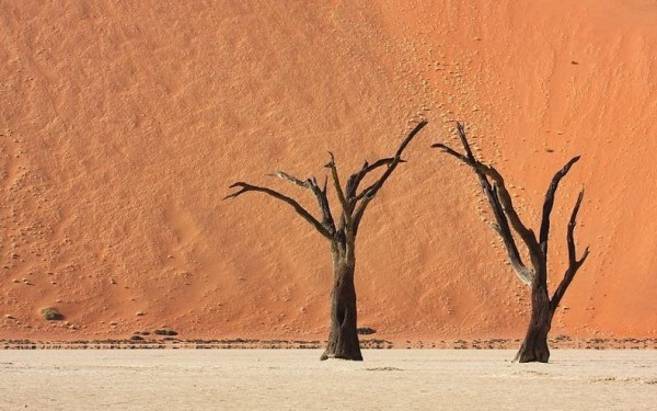 The Surreal Landscapes of Deadvlei