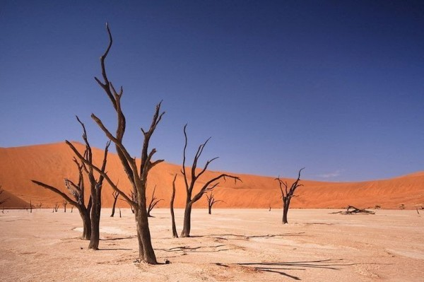 The Surreal Landscapes of Deadvlei