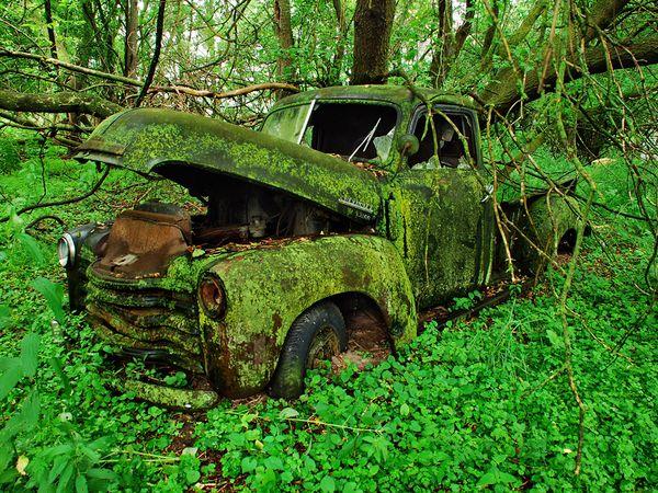 Moss-Covered Truck, Michigan