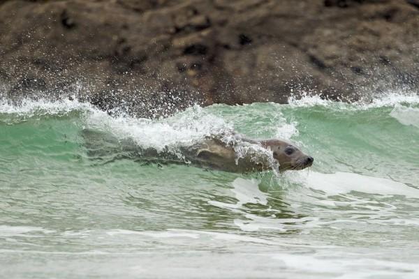 Surfer Photo by Tim Hunt