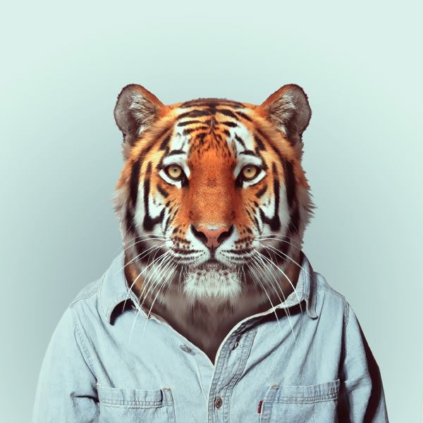 Zooportrety by Yago Partal