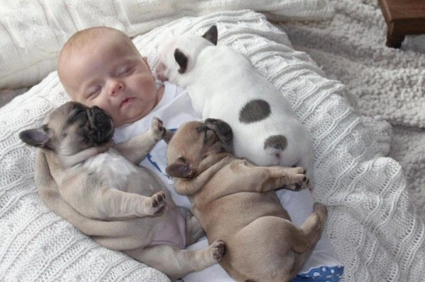 Baby and Bulldog Puppies