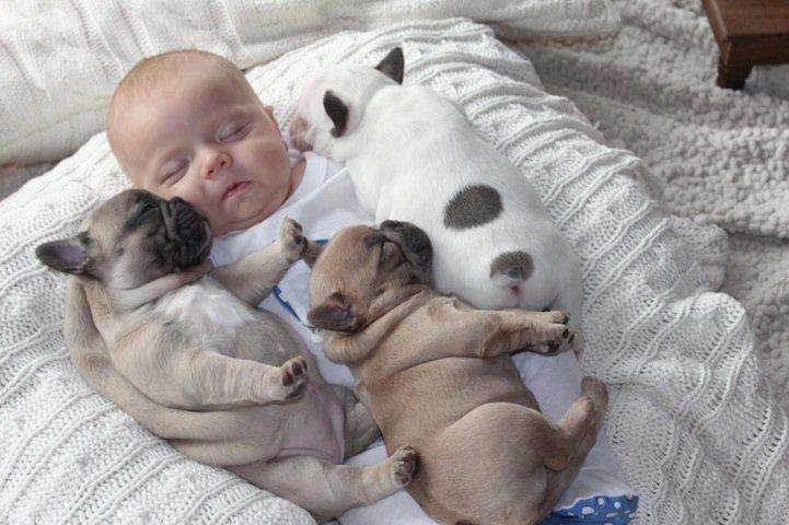 Baby and Bulldog Puppies