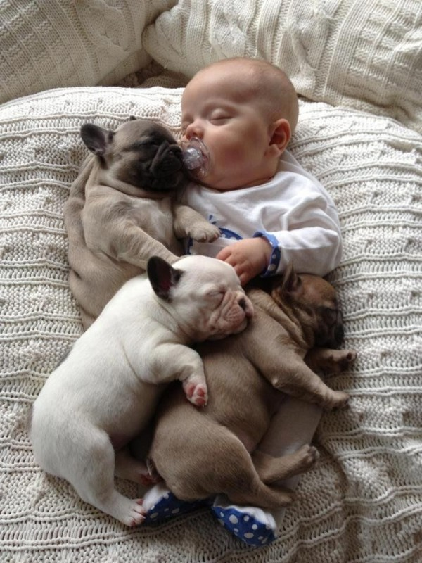 Adorable Baby Cuddles Up with French Bulldog Puppies